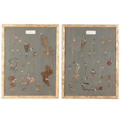 Pair of French Gilded Frames with Botanical Herbaria, circa 1930s