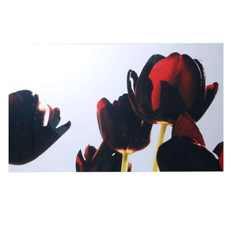Renato Freitas, Black Tulips, Original Photography