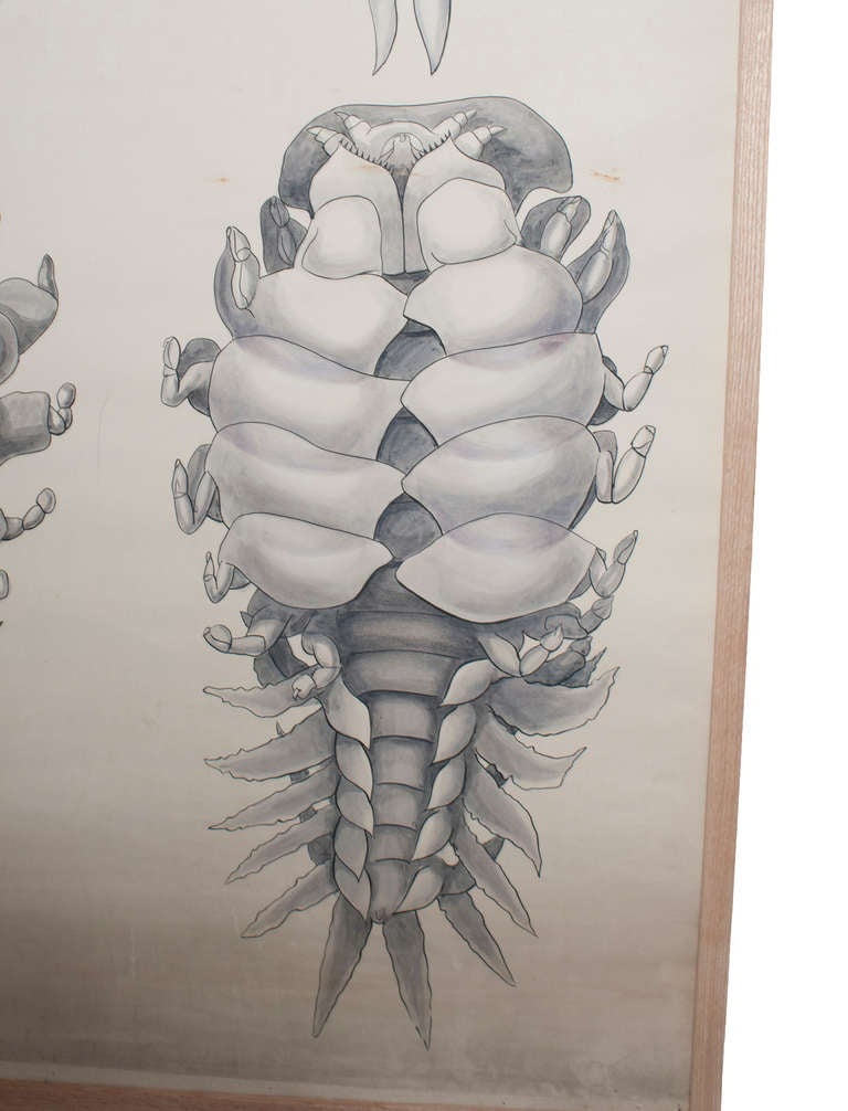 French Set of Six Framed Posters for Biology Class For Sale