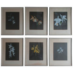Set of Six Gouache Paintings of Orchids