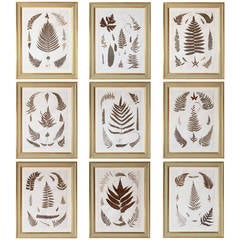 Set of Nine 19th Century Jamaican Ferns in Gilt Frames