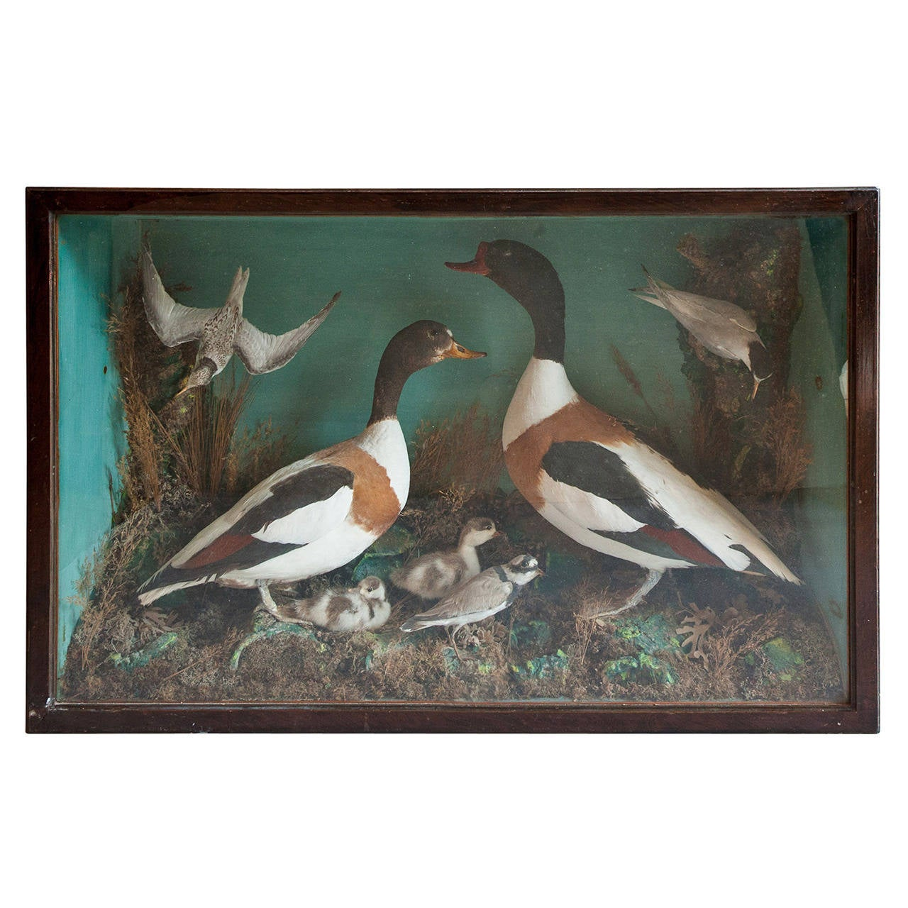 Victorian country house collection of taxidermy birds at for Country house collections