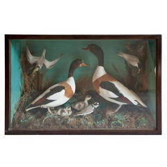Victorian Country House Collection of Taxidermy Birds