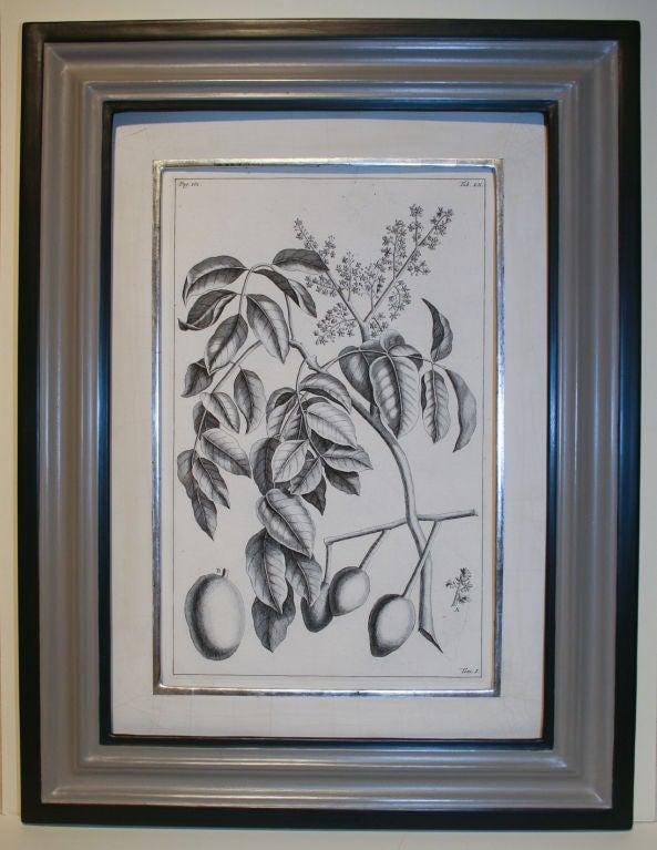 Set of 20 Black & White 18th Century Botanical Prints image 10