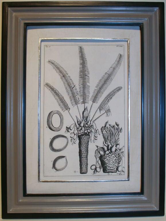 Set of 20 Black & White 18th Century Botanical Prints image 2