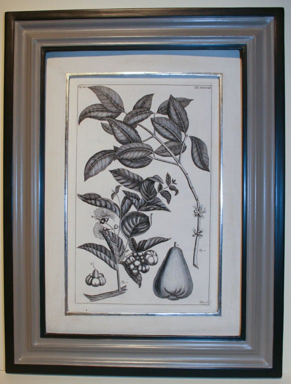 Set of 20 Black & White 18th Century Botanical Prints image 3