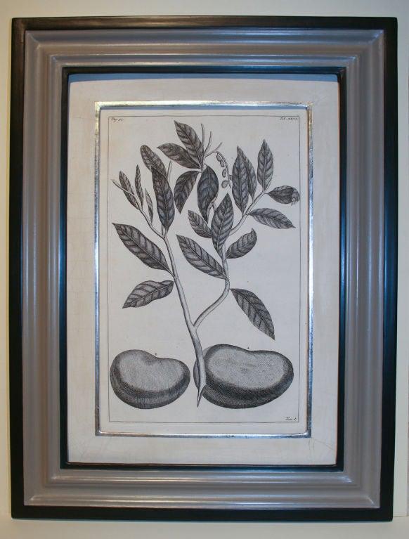 Set of 20 Black & White 18th Century Botanical Prints image 4