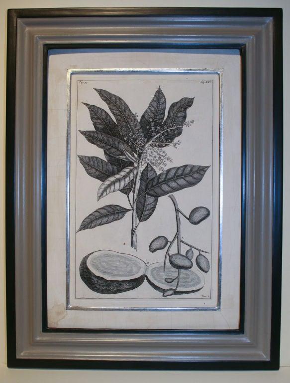 Set of 20 Black & White 18th Century Botanical Prints image 5