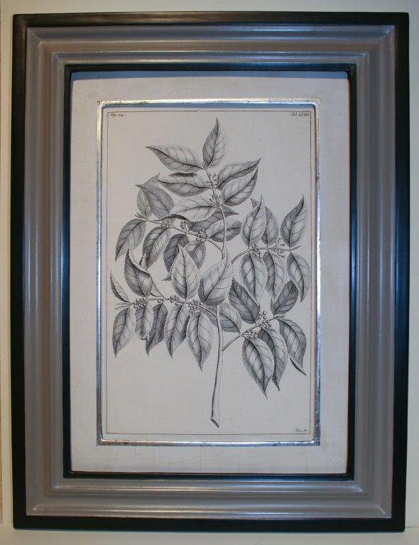 Set of 20 Black & White 18th Century Botanical Prints image 7