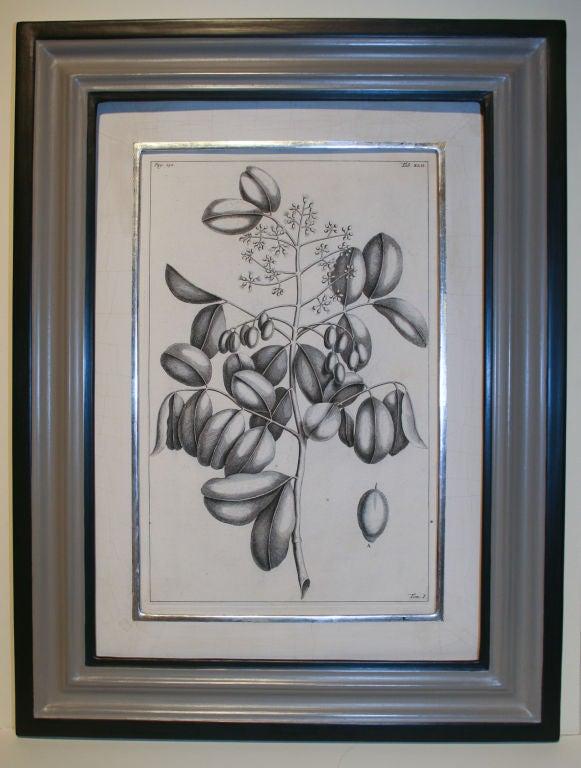 Set of 20 Black & White 18th Century Botanical Prints image 8