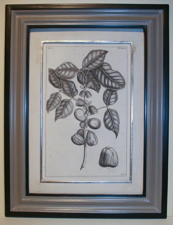Set of 20 Black & White 18th Century Botanical Prints image 9