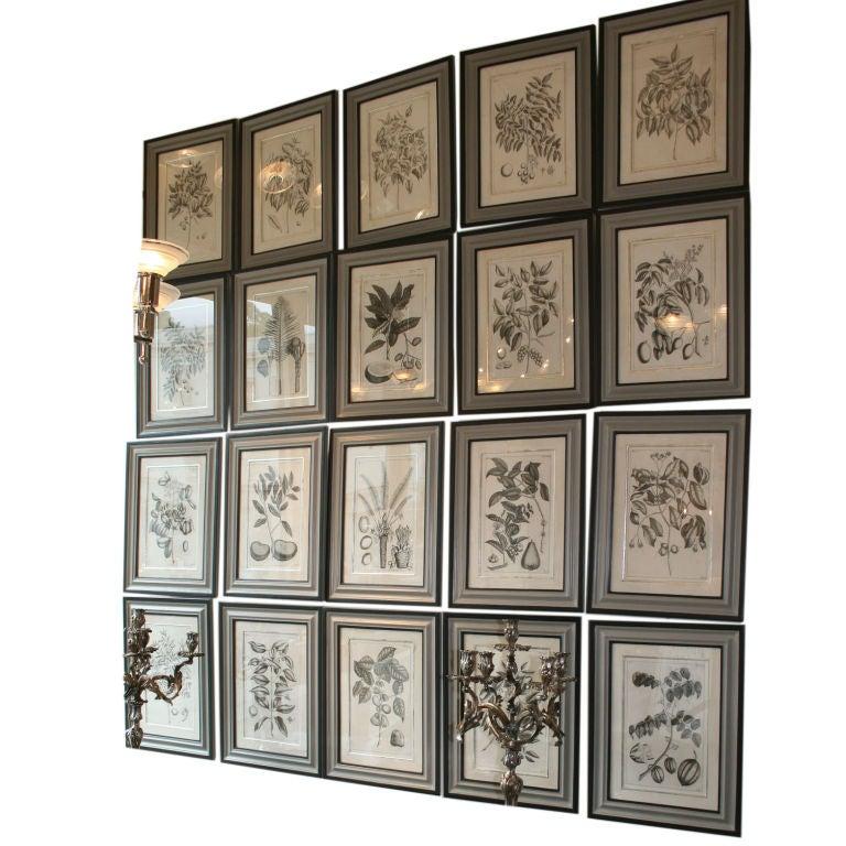 Set of 20 Black & White 18th Century Botanical Prints