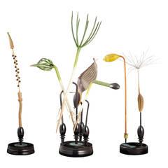 R. Brendel Botanical Models