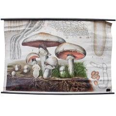German Botanical Mushroom Chart