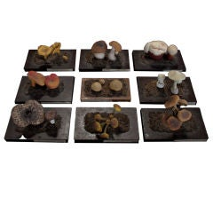 Unique Set of Botanical Mushroom Models