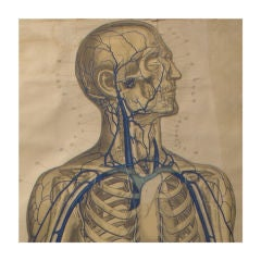 German Vascular Anatomical Chart