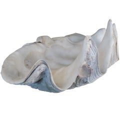 Monumental Deep Ocean Natural Clamshell