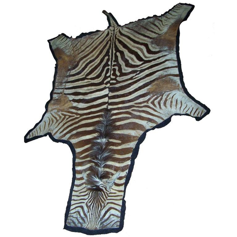 Vintage Zebra Skin Rug On Black Felt At 1stdibs
