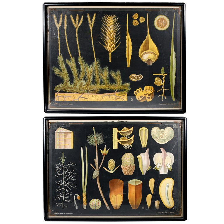 Pair of 19th Century German Botanicals For Sale