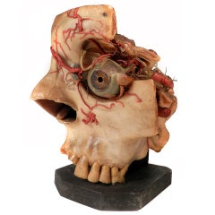 Oversized Wax Anatomical Model - 1800s