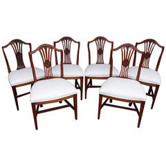 Set of Six American Hepplewhite Mahogany Side Chairs, Massachusetts, Circa 1810