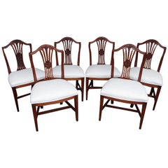 Set of Six American Hepplewhite Mahogany Side Chairs, Massachusetts, Circa 1810