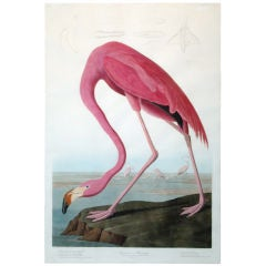 "John James Audubon's ""American Flamingo"""