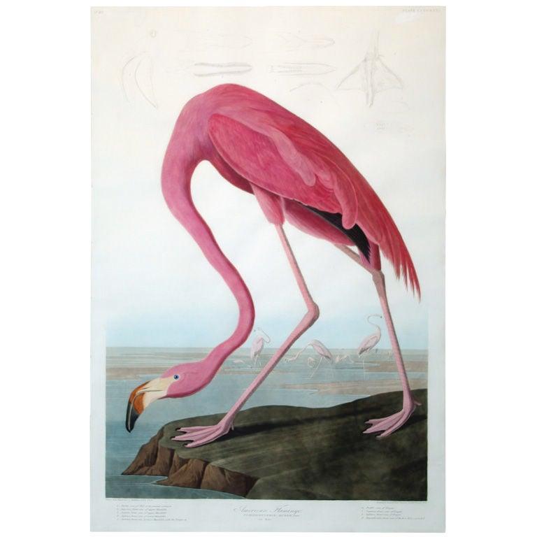 John James Audubon 39 S American Flamingo At 1stdibs
