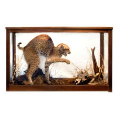 """Bobcat Meets Snake""  Victorian Taxidermy in Glass Case"