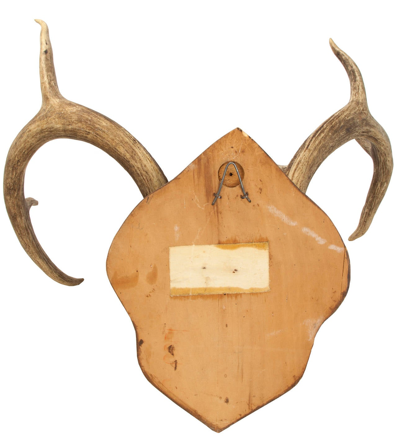 Antique Mounted Mule Deer Antler Trophy For Sale At 1stdibs