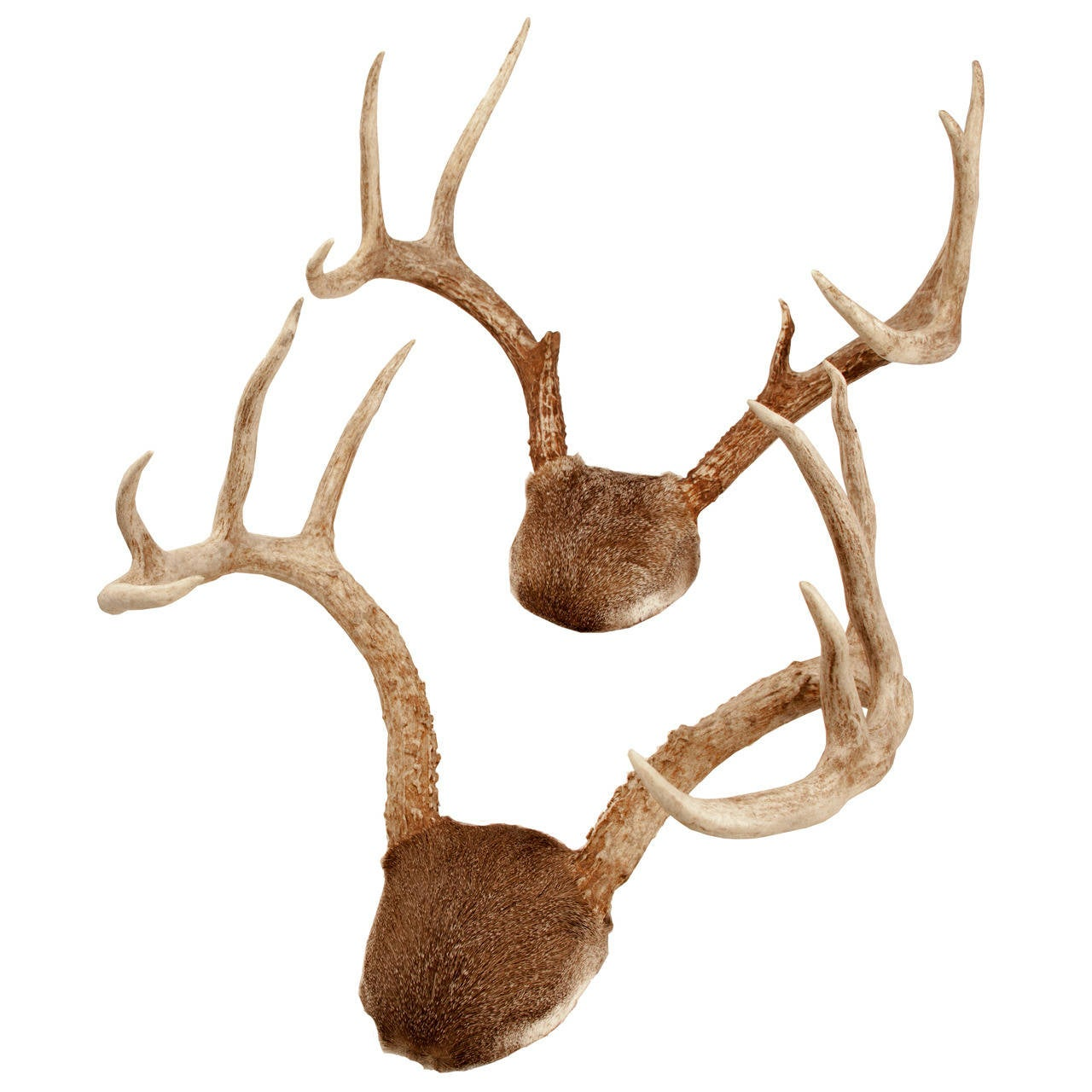 Antlers For Sale >> Pair Of Mounted White Tailed Deer Antlers