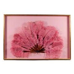 Circa 1910 Pink Marabou & Tortoiseshell Framed Fan