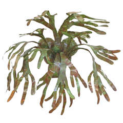 Enameled Copper Staghorn Fern Wall Sconce