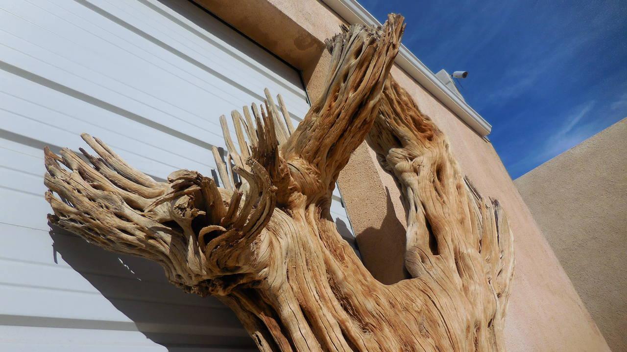 Monumental Tall Cactus Skeleton At 1stdibs
