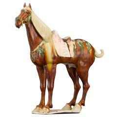 Tang Dynasty Funerary Ferghana Horse