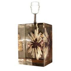 A resin sea urchin table lamp