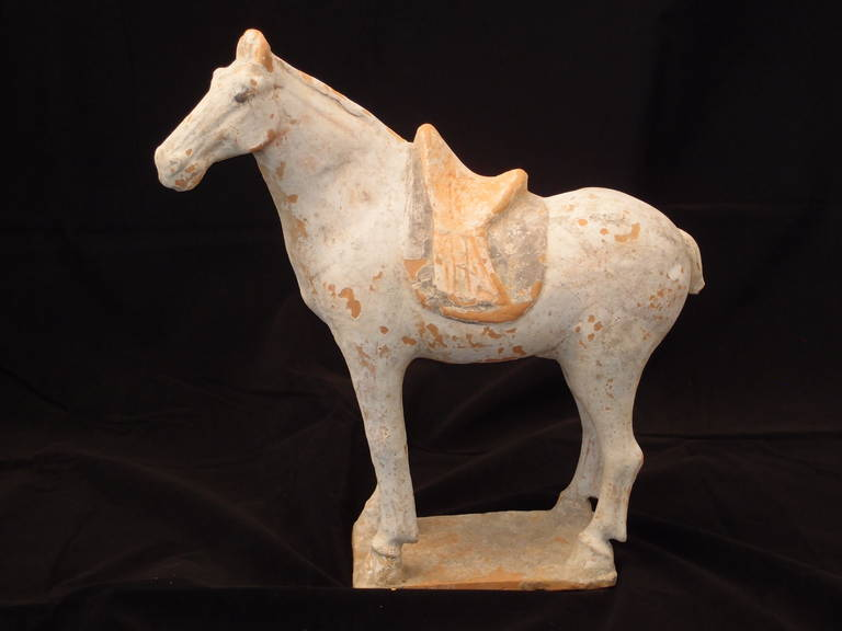 A Chinese Tang dynasty pottery model of a horse. The majestic animal is portrayed standing foursquare on a rectangular plinth, head slightly turned. A saddle and saddle blanket are draped elegantly over the back. A white slip mostly intact, with