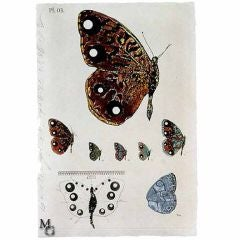 Butterfly, 1996 Print by Donald Sultan