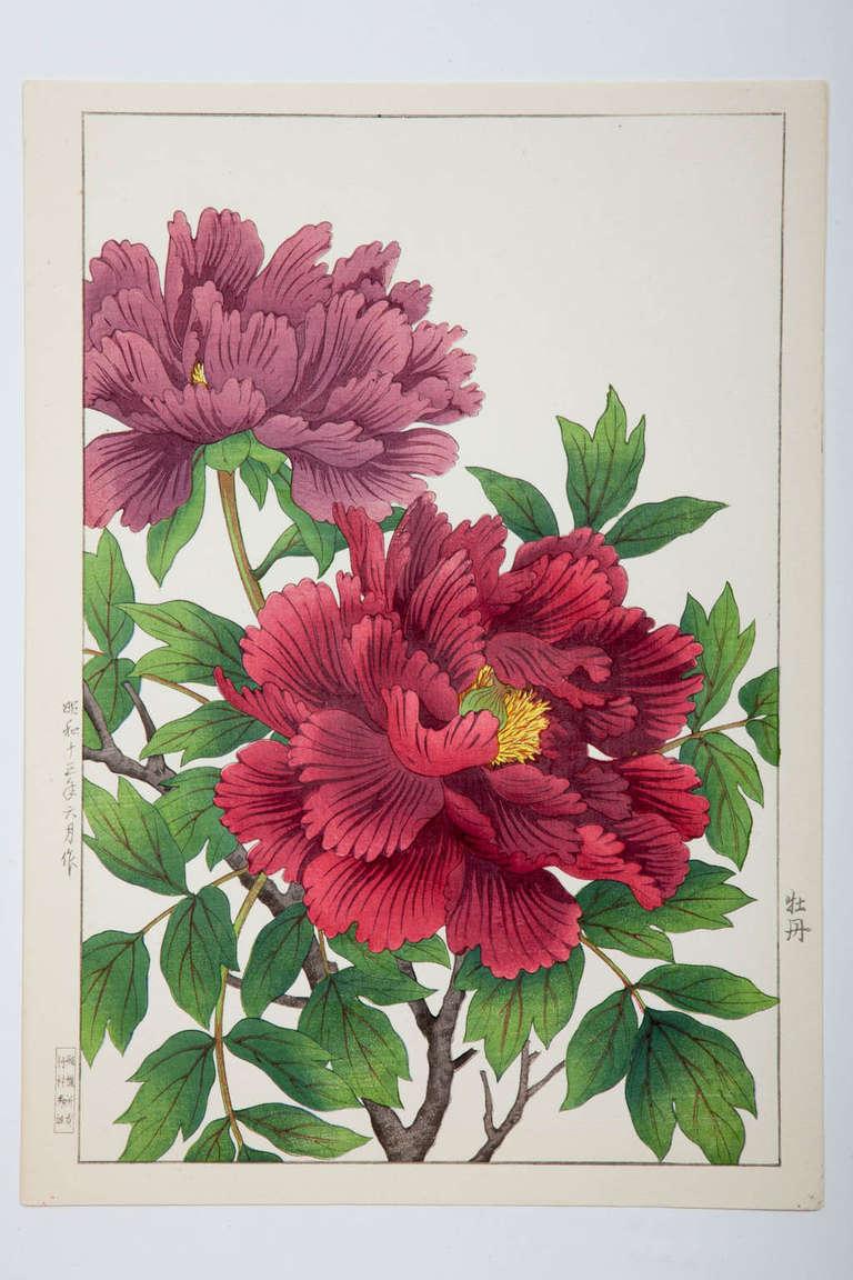 Japanese Showa Botanical Print of Peonies 4