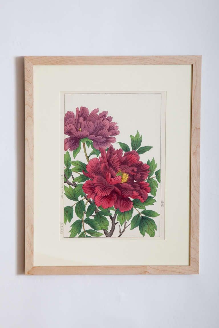 Japanese Showa Botanical Print of Peonies 3