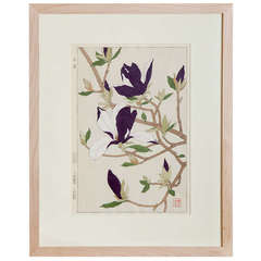 Japanese Show Botanical Print of a Magnolia Branch