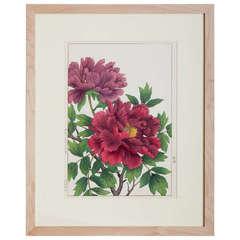Japanese Showa Botanical Print of Peonies