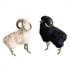 Bronze & Wool Sheep