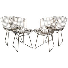 Set of Four Newly Refinished Bertoia Dining Chairs for Knoll