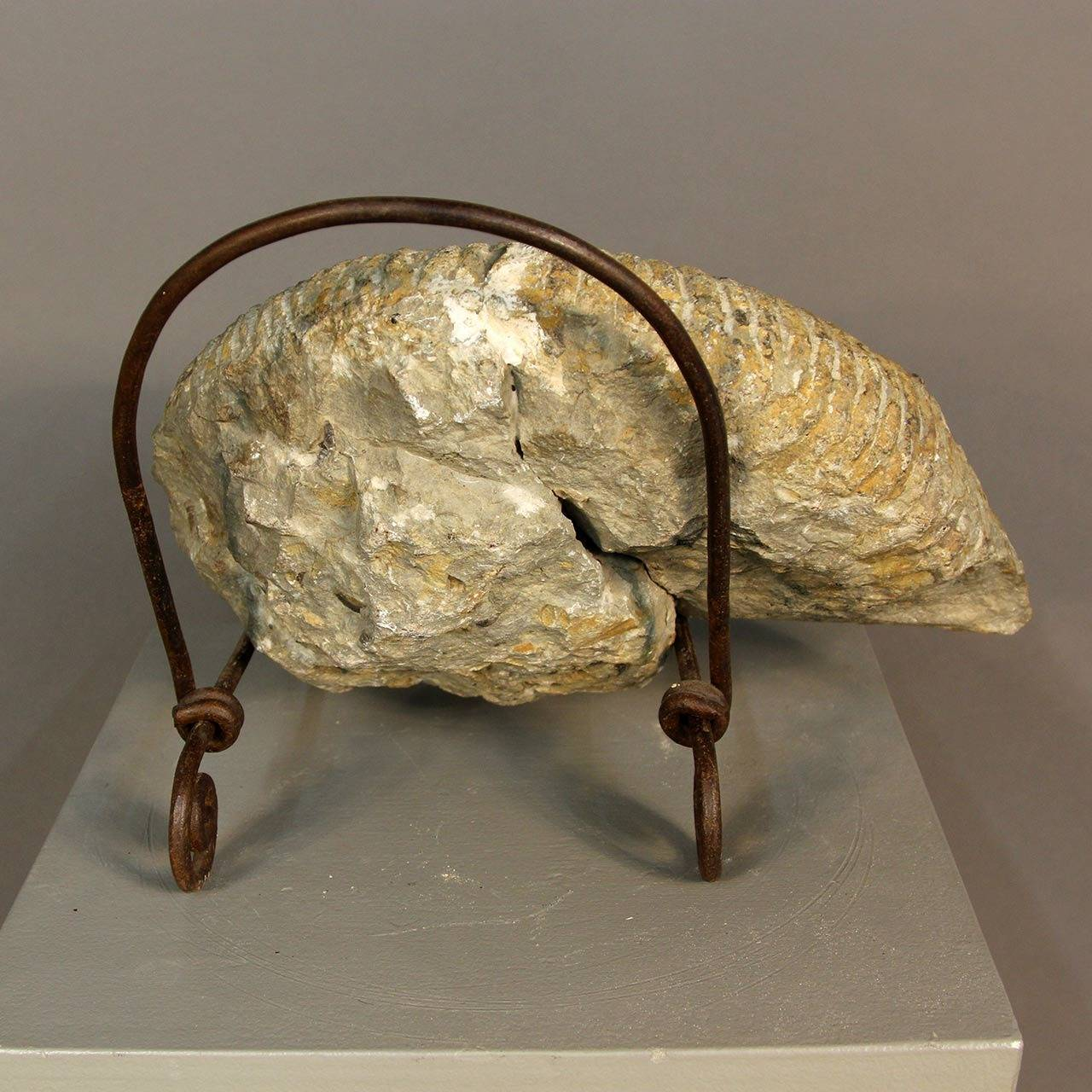 Beautiful fossilized ammonite specimen. Gorgeous detail, very nice piece. Has repaired crack as seen in images. Sits on iron stand.
