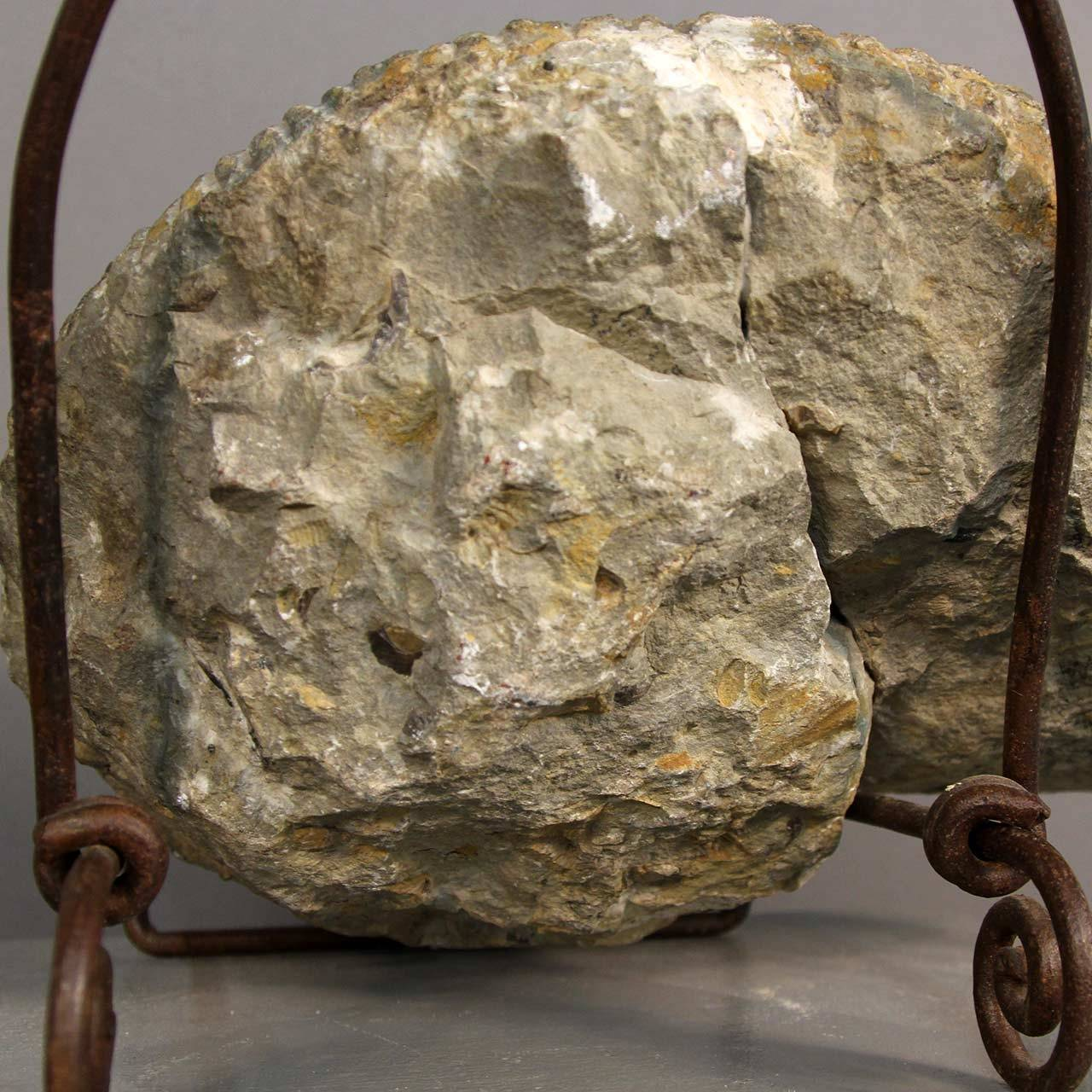 Ammonite Fossil on Stand For Sale 1