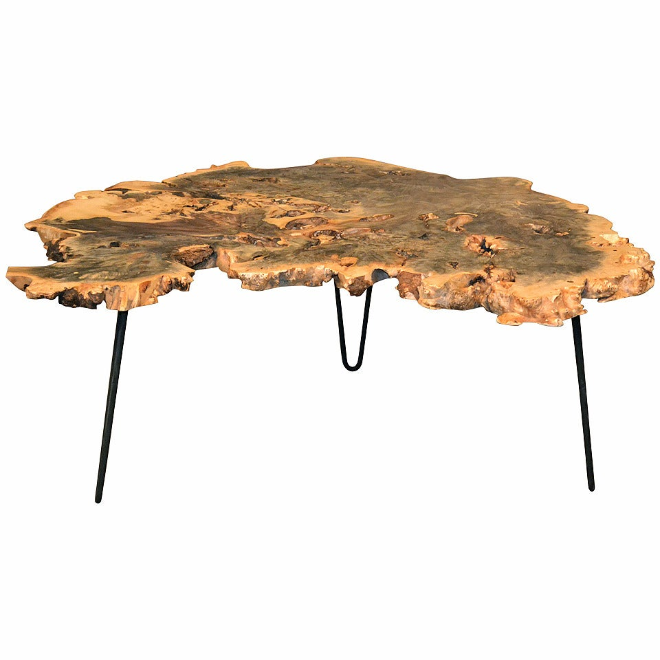 Round Wood Hairpin Coffee Table: Buckeye Burl Wood Coffee Table With Hairpin Legs At 1stdibs