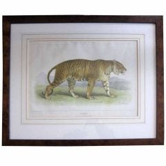 Original Tiger Print by Karl Joseph Brodtmann