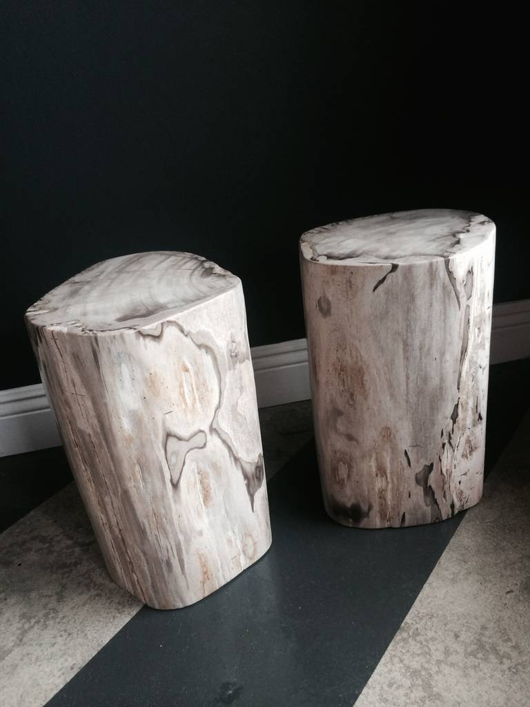 Pair of Polished Petrified Wood Tables or Stools 2