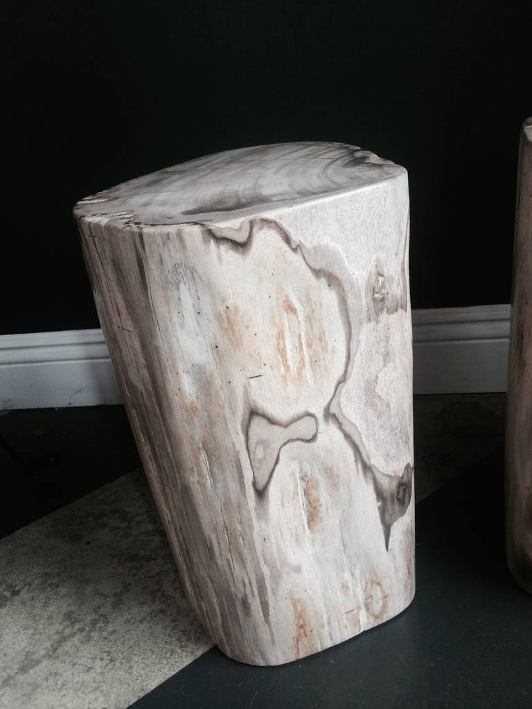Pair of Polished Petrified Wood Tables or Stools 4